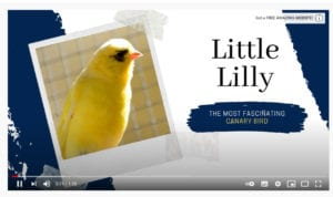 Little Lilly CO2 meter